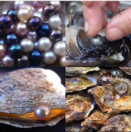 MAKE ME AN OFFER! 6 INDIVIDUALLY WRAPPED AKOYA OYSTERS WITH PEARLS 6-7mm � Picture 1