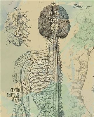 a look into chiropractic origin and history Conditions we help we look into your lifestyle habits to the pain patterns experienced in tension headaches are usually muscular in origin pain is.
