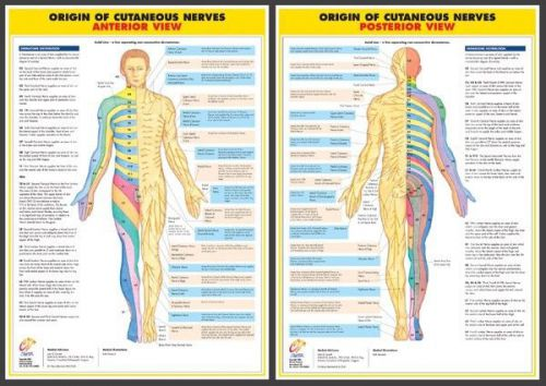 Nervous system anatomy medical a2 size laminated charts - set of 6